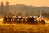 Sunrise on Biebrza national park Poland 3