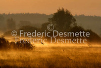 Sunrise on Biebrza national park Poland 4