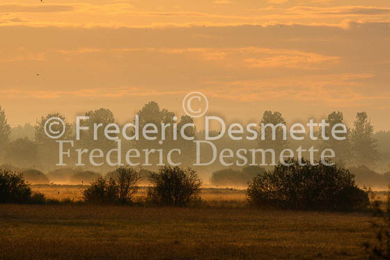 Sunrise on Biebrza national park Poland 1